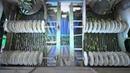 6 соток Производство маринованных огурцов