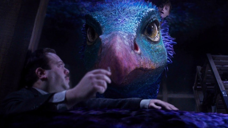 Окками, таракан и чайник — «Фантастические твари и где они обитают» (2016) сцена 5/7