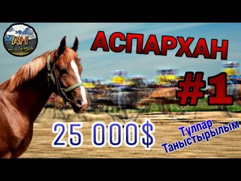 Бәйге Аты АСПАРХАН 25 000$ Тұлпар Таныстырылым About Horses