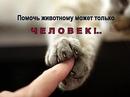 Дмитрий Сизов фото #20