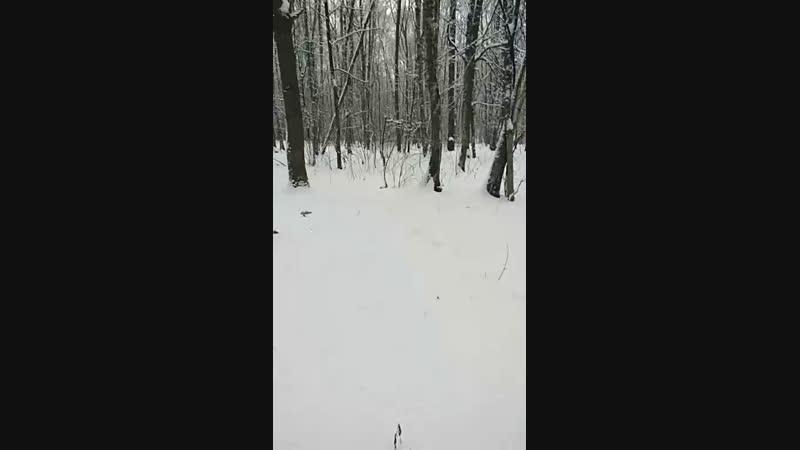 Москва место силы 9 Юго-Западный лесопарк