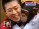 Реакция обезьяны на фокусы)