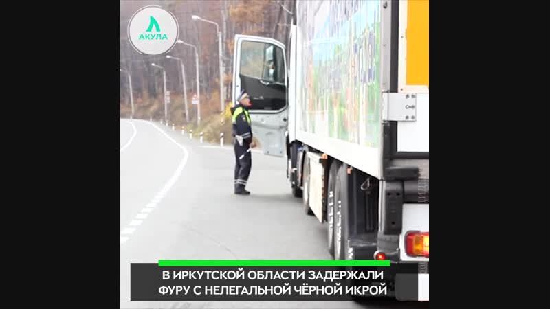 Черная икра на 100 млн. рублей | АКУЛА