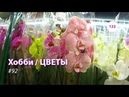 13292 / Хобби-Цветы / 10.12.2018 - ФУДСИТИ МОСКВА. ОРХИДЕИ — часть 1