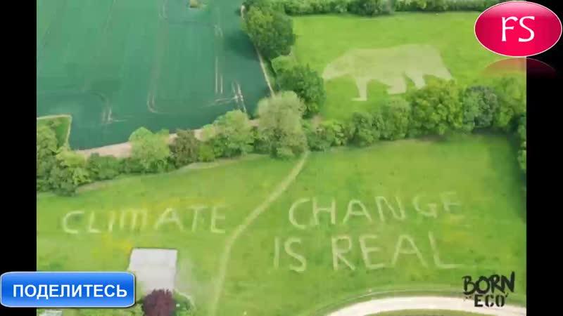 Британцы выстригли на траве послание для Трампа. Это огромный пенис