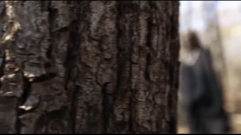 Тайны Чапман - Пёс с ними [23/05/2019, Документальный, SATRip]
