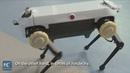 Trung Quốc công bố robot bốn chân chạy như ngựa