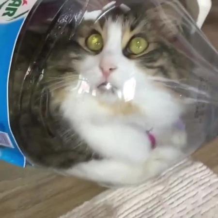Cat in the bottle