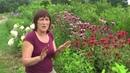 Как посадить растения по методу Хольцера