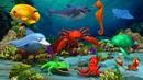 Sea Animals Names Under Water Peekaboo | Wild Zoo Animals Toys Video For Kindergarten Kids