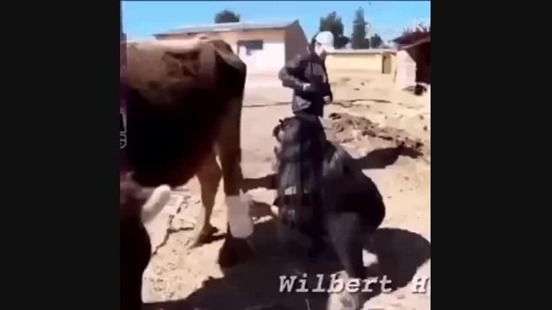 Можно молока? У нас только какао
