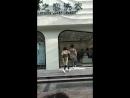 БТС Мой мальчик Маугли 偶遇杨紫马天宇拍戏(我的莫格利男孩)_IMG_7104