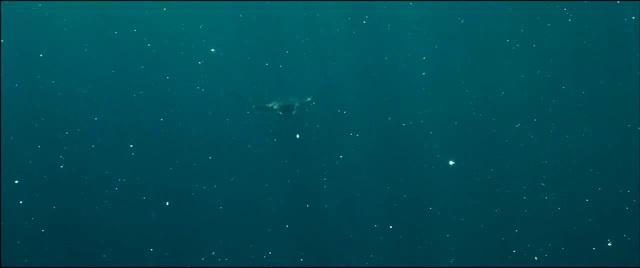 Flight (Oceans, 2009)