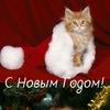 ღ Fotocats  ≧^◡^≦ | Сообщество любителей кошек