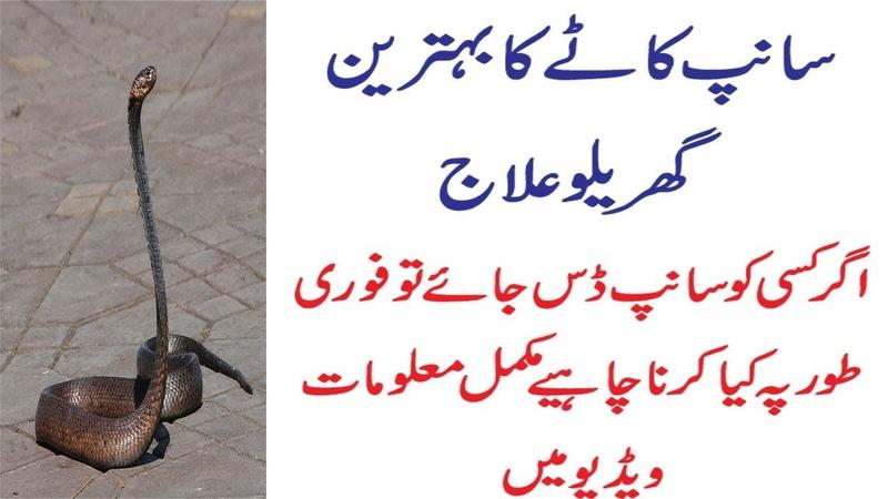 Tips Snake Kate to Kya Karna Chahiye |Best Treatment of Snake Bite in Hindi Urdu