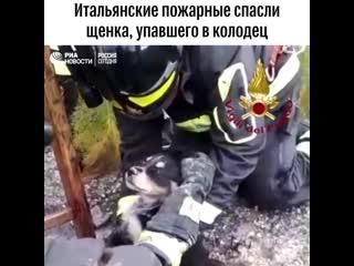 Итальянские пожарные спасли щенка, упавшего в колодец