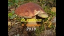 Поход За грибами 2018 1
