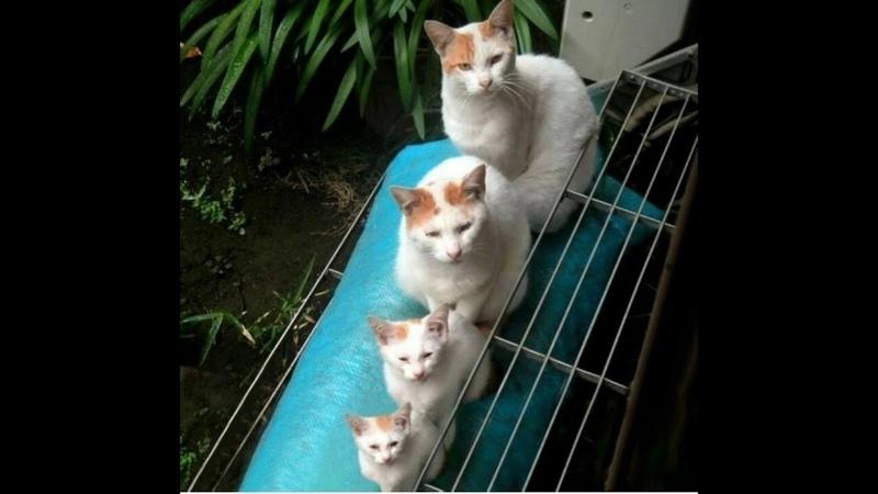ПОПРОБУЙ НЕ ЗАСМЕЯТЬСЯ Смешные Коты и Собаки ПРИКОЛЫ С ЖИВОТНЫМИ Cute Dogs and Cats 108