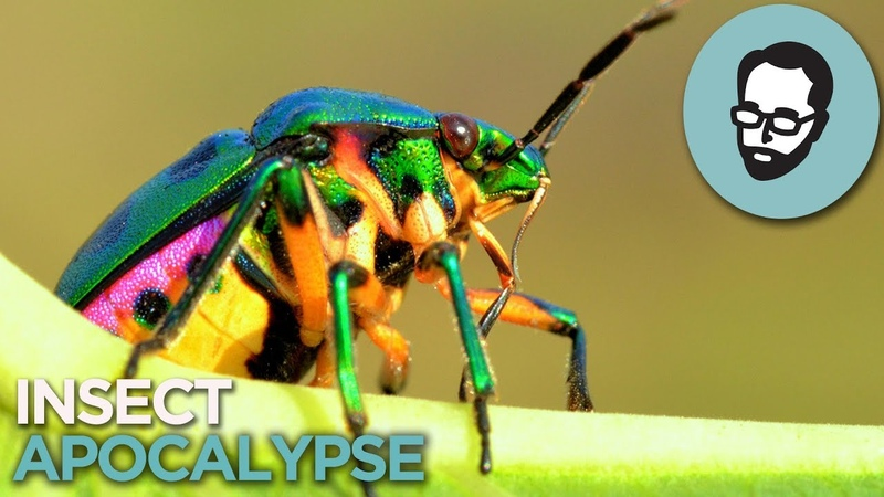 An Insect Apocalypse Is Happening. Here's Why That's A Problem. | Random Thursday