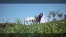 Свадебное видео Виталий Екатерина 2018 Николаев Instagram версия wedding highlights видеограф