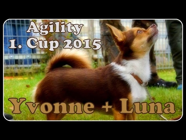 Yvonne mit Chihuahua Luna ( 1. Agility Cup 2015 in Recklinghausen )