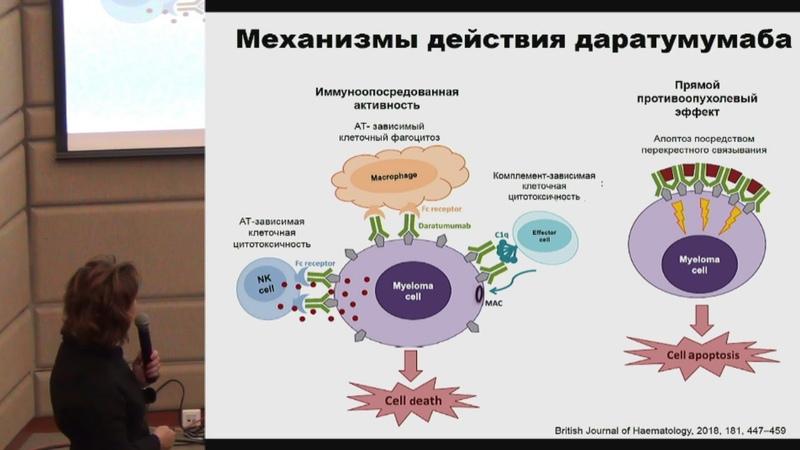 Салогуб Г Н Современные иммунотерапевтические подходы в лечении множественной миеломы
