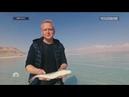 Голубь и змея. Красный теленок. Рыба в Мертвом море