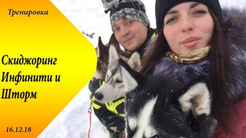 Скиджоринг две собаки Саратов 16 декабря Инфинити и Шторм Хаски