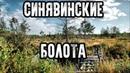 Таинственные места России - Синявинские болота