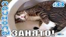 ЛУЧШИЕ ПРИКОЛЫ С ЖИВОТНЫМИ 2019 Смешные Коты и Кошки Приколы с котами до слёз 33