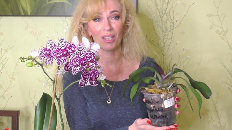 Выход орхидеи из реанимации! 😀 Изменение способа полива и системы посадки. Мой Дикий Кот! 💖