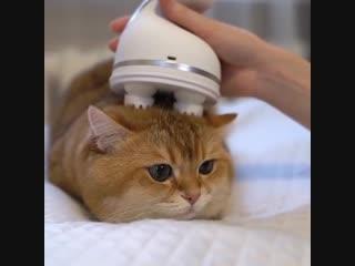 что только не придумают ! уже есть и массажёры для котов 😻