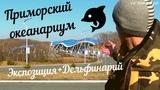 ПРИМОРСКИЙ ОКЕАНАРИУМ + ШОУ БЕЛУХ, МОРЖА МИШИ и ДЕЛЬФИНОВ Full HD