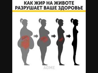 Как жир на животе разрушает ваше здоровье