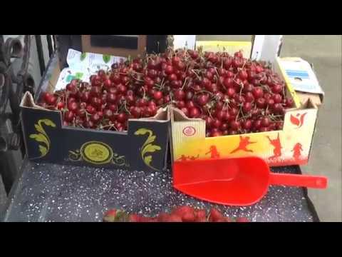 Obilne padavine ne pogoduju jagodama i trešnjama 06 06 2019