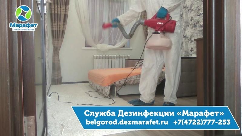 Уничтожение блох в Белгороде - ДезСлужба Марафет