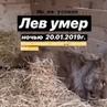 """Помощь Животным on Instagram: """"20.01.19 📣 обновление 20:12 ✅Весь день мы предпринимали действия, что бы официально это зафиксировать, связались с"""