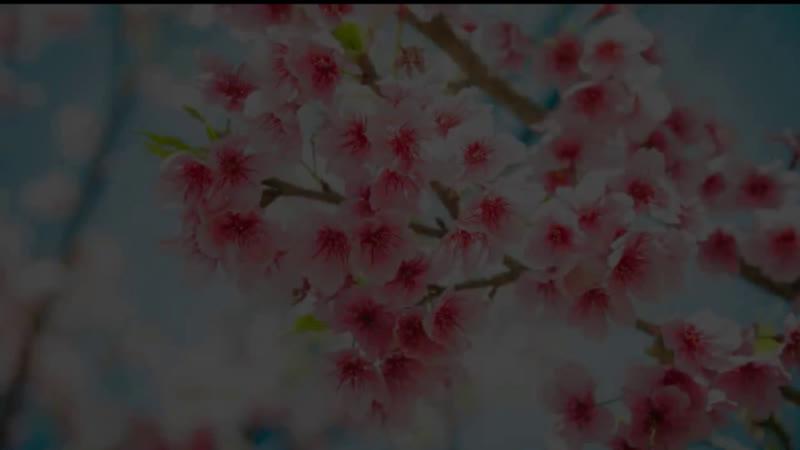 Игорь Светоч Трансформационная терапия Путь героя - 22 энергии судьбы 16 февраля в 17-00