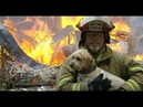 Firefighters Heroes Rescue Animals lives 2018 - Real Life Heroes - Faith In Humanity Restored 2018