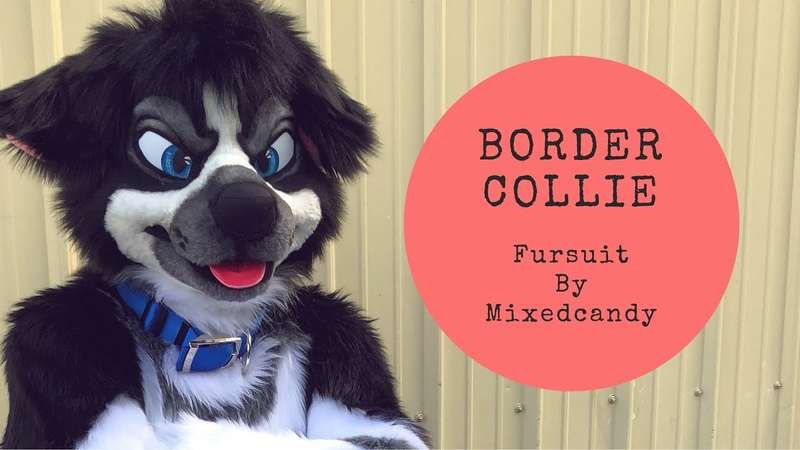 Border Collie by Mixedcandy