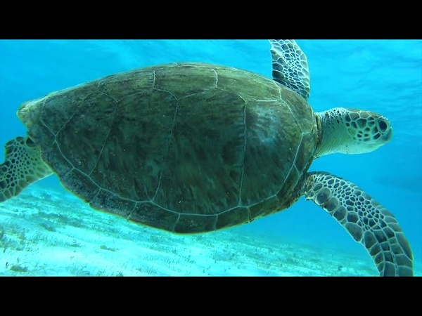 Подводный мир Тобаго марине парка (Under water Tobago cays).
