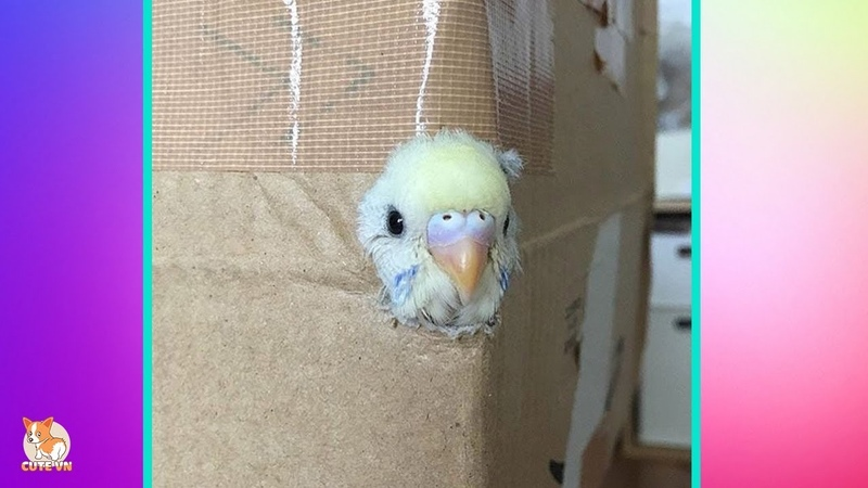 🤣 Cute Parrots Doing Funny Things 2 - 😍 Cutest Parrots In The World 2018
