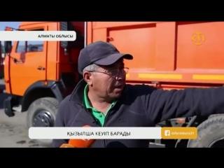 Алматы облысында шаруалардың қант қызылшасын өткізуі бейнет боп тұр