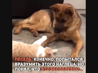 Дружба с первого взгляда