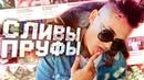 ВСЯ ПРАВДА! РАЗОБЛАЧЕНИЕ MORGENSTERN, ПРОЕКТ И ЕГО ЗАКРЫТИЕ! Feat. Лаймпилл (Пародия)