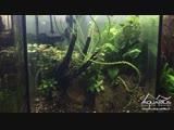 Aquascaping Visite du showroom d Aquarilis 20 aquariums à découvrir