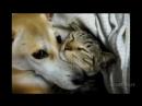 собаки VS кошки 3