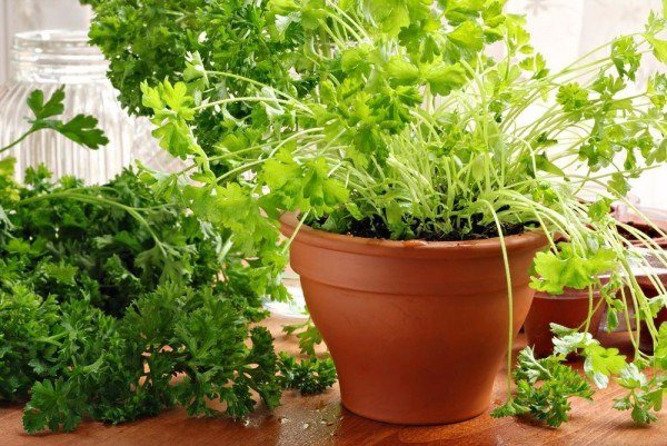 13 пряных трав, которые можно выращивать дома