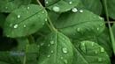 Fariborz Lachini - Raindrops