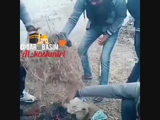 QURON_VA_QALB on Instagram_ __uzbekistan _uz_video_0(MP4)_2.mp4